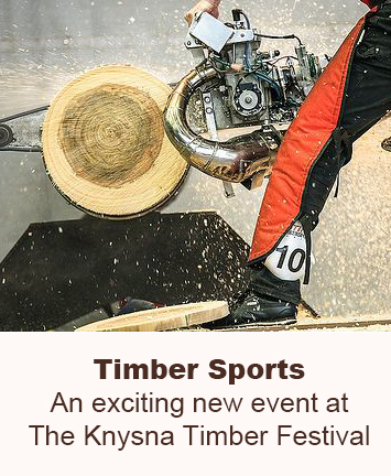 Timber Sports 2